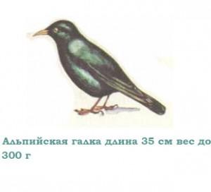 Картинки птиц с названиями