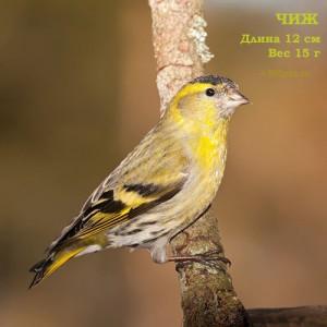 Птицы фото