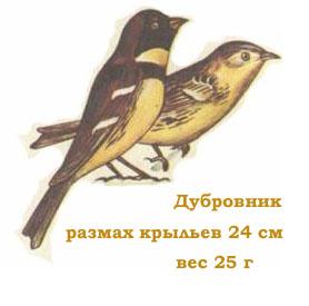 Картинки птиц скачать