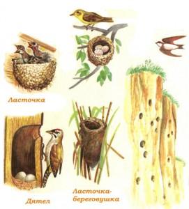 Картинки гнезда птиц