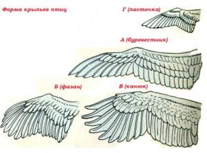 Крылья птиц картинки