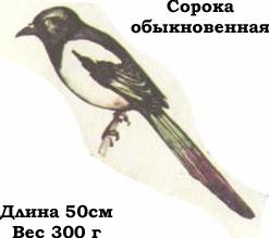 Птицы россии в картинках