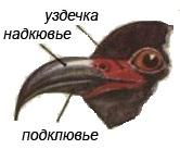 Фото клювы птиц