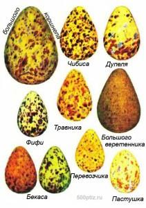 Яйца птиц