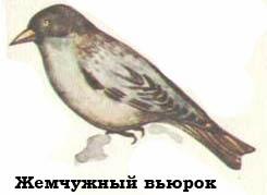 Птицы картинки