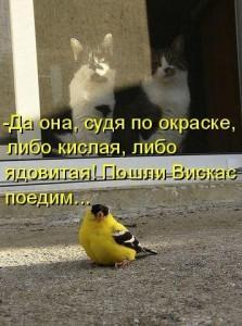 Смешные фото птиц