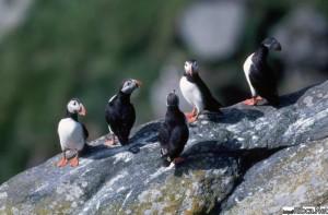 Птицы крайнего севера