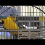 Попугаи видео
