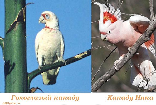 Отряд попугаеообразные