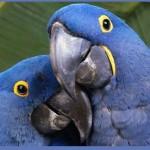 Птицы на букву А