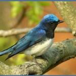 Птицы на букву М