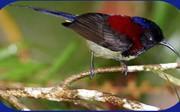 nektarinitsi1