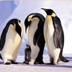 Отряд пингвинообразные