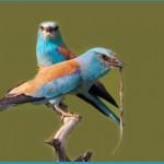 Отряд класса птиц
