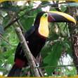 Разные виды птиц