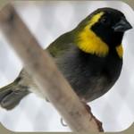 Птицы на букву В