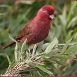 Календарь с птицами на 2015