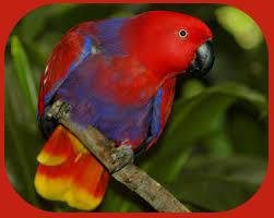 Птицы на букву Э