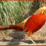 Птицы на букву Ф