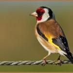 Птицы на букву Щ